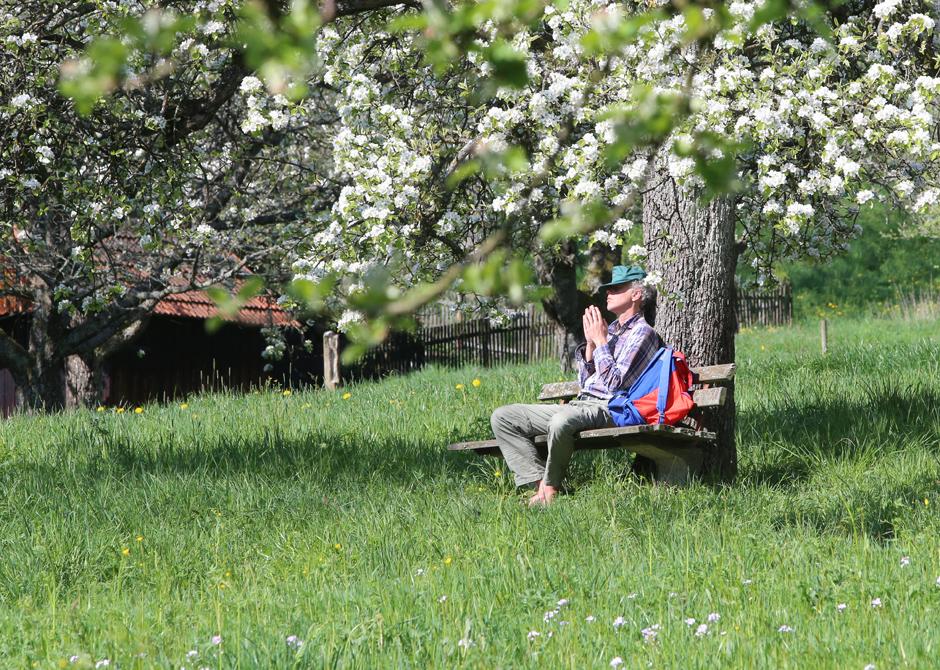 Mann sitzt auf einer Bank mitten in einer Frühlingswiese