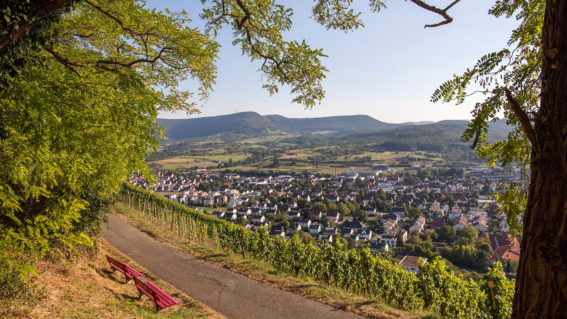 Aussicht auf Metzingen von einem Weg im Weinberg