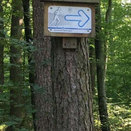 Wald mit dicken Baumstämmen, im Vordergrund eine Informationstafel