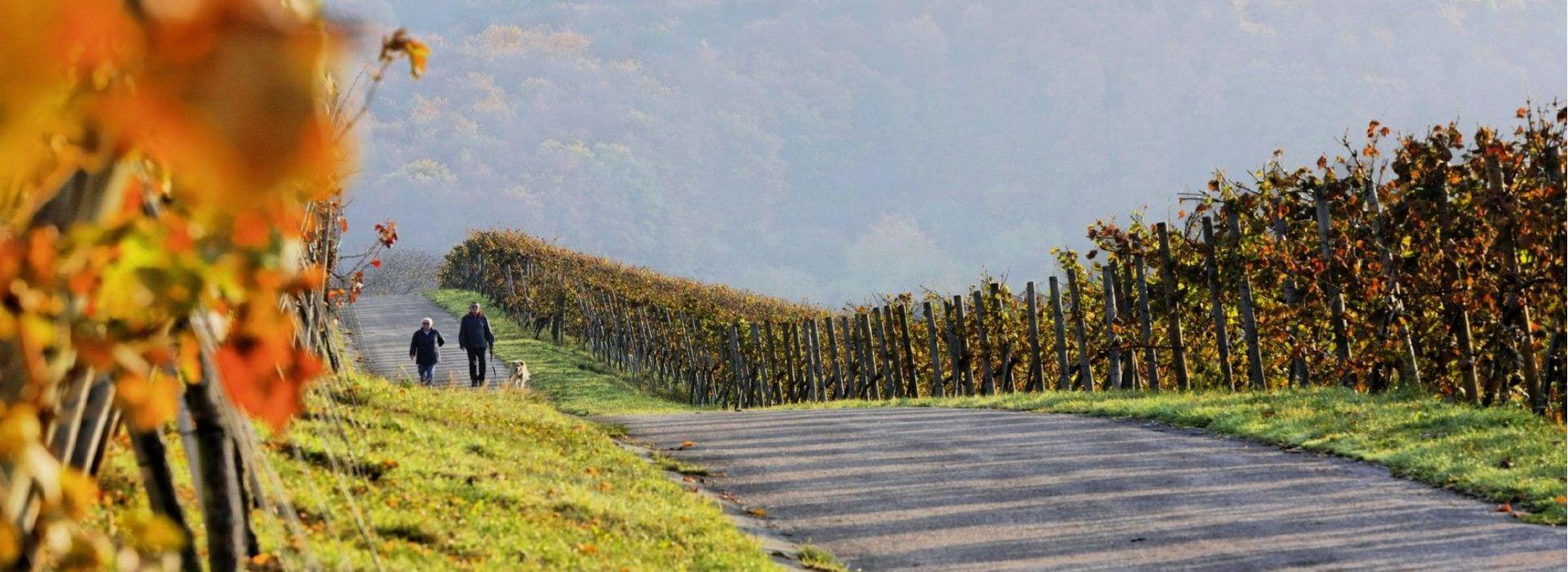 Wein-Berge von Metzingen