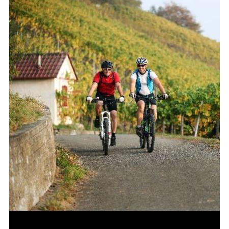 Zwei Radfahrer im Metzinger Weinberg